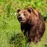 Špiljski medvjed izumro je zbog ljudi?