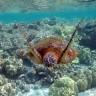 Pogledajte kako je morska kornjača snimila samu sebe