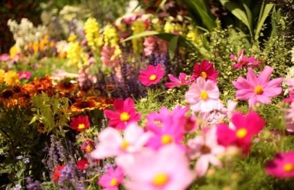 Što znače vrste cvijeća u snovima