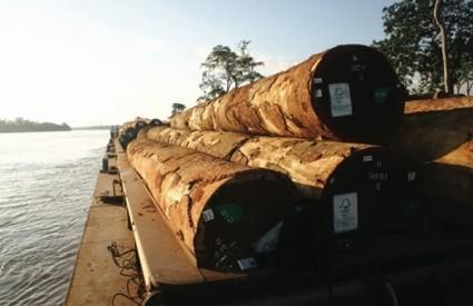 ilegalna sječa šuma