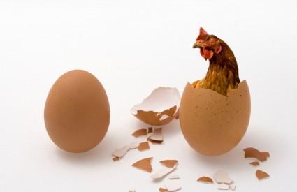 Zašto Mujo nije zadovoljan svojim kokošima