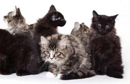Koliko mačke koriste?