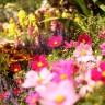 Snovi o cvijeću i njihovo značenje