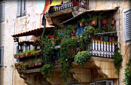 Vaš balkon i zimi može biti cvjetna oaza