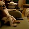 Bulldog sjedi na kauču i gleda TV