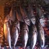 Kako pravilno pripremiti ribu?