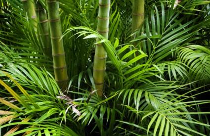 Najugroženije su biljke u tropskim kišnim šumama