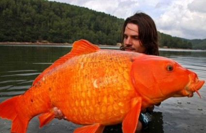 Zlatna ribica