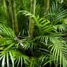 Znanstvenici otkrili da biljke međusobno komuniciraju