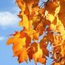 Mitovi vezani za prvi dan jeseni