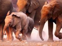 Zimbabve - slonovi umiru od suše i gladi