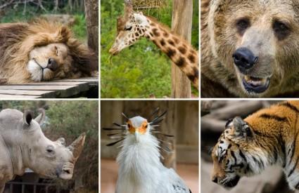 Zaštitimo životinje