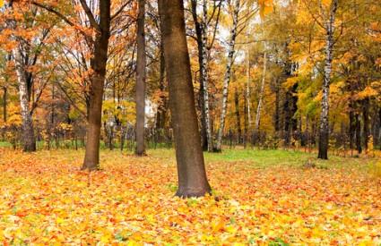 Jesen baš i nije dobar san