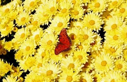 Leptiri su najugroženiji