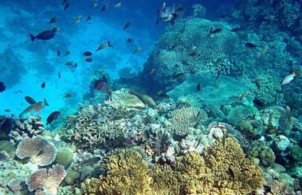 Morski ekosustavi u velikoj su opasnosti