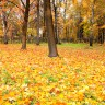 Sanjarica - snovi o školi i jeseni