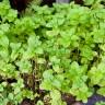 Biljke koje pomažu kod želučanih tegoba