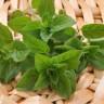 Aromatično bilje - dobro za um, zdravlje i kućni budžet