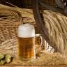Krigla piva dnevno štiti srce