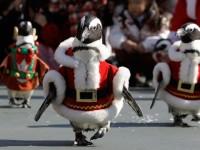 Božićni pingvini