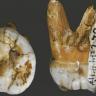 Čudesne lubanje otkrivene u Kini zbunile znanstvenike