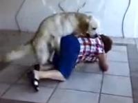 Napaljeni pas i baka