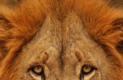 Kako se Mujo želi spasiti od lava