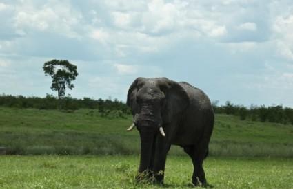 Divlji svijet je ugrožen više nego ikad