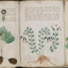 Znanost na pragu otkrivanja velike zagonetke 20. stoljeća - Vojnich manuskripta