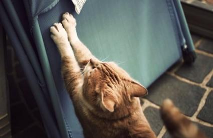 Kako mačku držati podalje od namještaja?