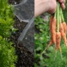 Eko savjet tjedna - vrtlarstvo