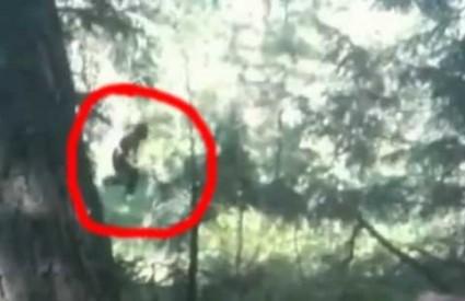 Pravi Bigfoot ili još jedan prerušeni šaljivdžija?