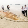 Čudovište iz morskih dubina nasukalo se u Kini