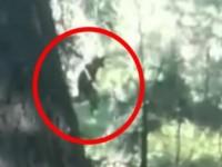 Nova snimka Bigfoota?