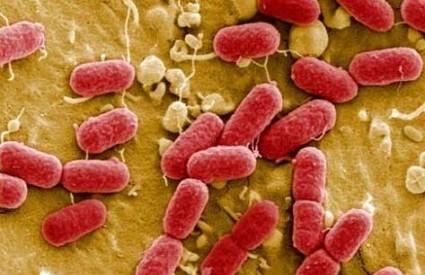 Smrtonosni soj E. coli