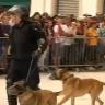 Nasilje na Gay Prideu u Splitu izolirani je incident