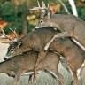 Zanimljivi seks rekordi iz životinjskog svijeta
