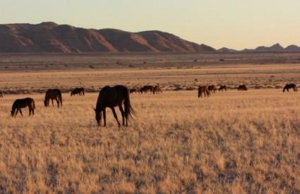 Što zna mali Mujica o konjima