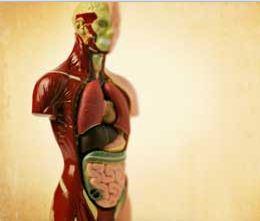 Što se sve događa u našem tijelu