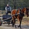 Slovenac dobio kaznu zbog vožnje konjske zaprege u pijanom stanju