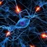 Mozak nakon 13. godine ne proizvodi neurone za pamćenje