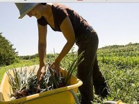 """Netradicionalnom """"narodnom"""" farmom protiv klimatskih promjena"""