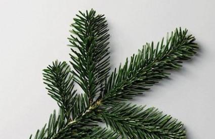 Božićno drvce može donijeti alergije