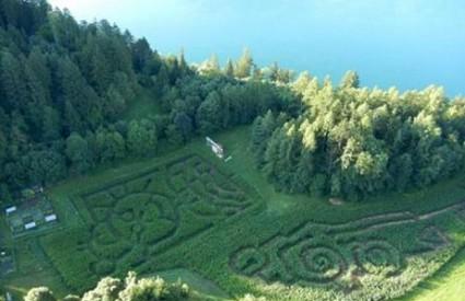 Dva hektara kukuruznih polja postala labirint