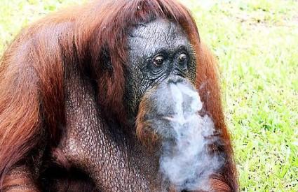 Puši se iz raznih razloga