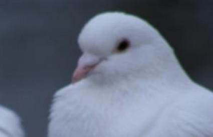 Kako si golupčići najčešće tepaju :)