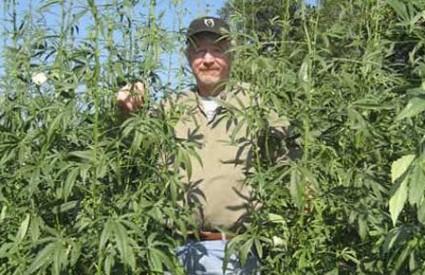 Bill Loftus u svom polju kenafa