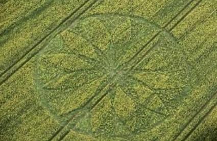 Prvi ovogodišnji krugovi u žitu