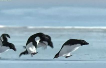 Hoće li pingvini napokon dobiti zaštitu?