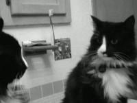 Ovo je Henri, najdepresivnija mačka na svijetu